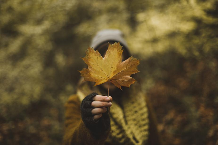 woman-holding-maple-leaf-in-fall_925x